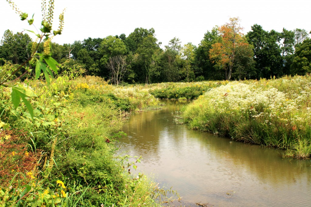 Photo Station 9 downstream