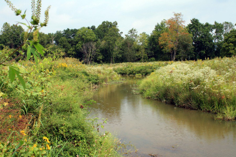 Salt Lick Creek Stream Restoration | Bath County, Kentucky